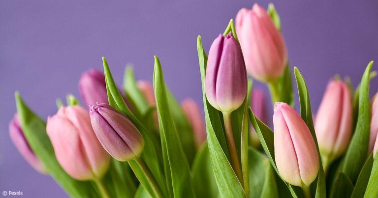 Online-Shops für Blumen