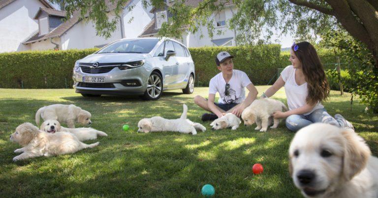 Sparsame Autos für die Familie