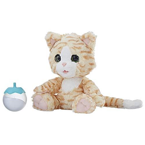 Cara, mein kuscheliges Kätzchen